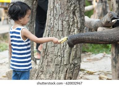 child and elephant