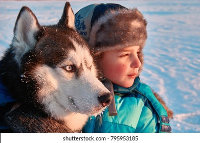 Child embraced husky dog with blue eyes. Boy in blue feather-top sits with  Siberian husky in snow and looks into distance. Warm evening lighting.