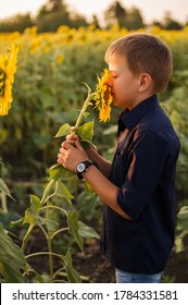 A child of the European race sniffs a sunflower on a blurred background.  Sunflowers Fields. Copy space. Summer landscape. Blue sky.