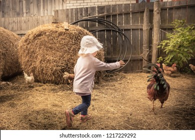 child farmer playing fun in farm barn with chiken cock in rustic poultry house in countryside farmyard farming lifestyle