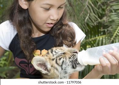 Child feeding baby tiger
