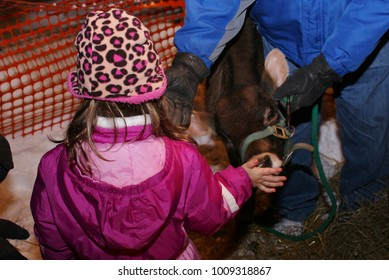 Child feeding calf
