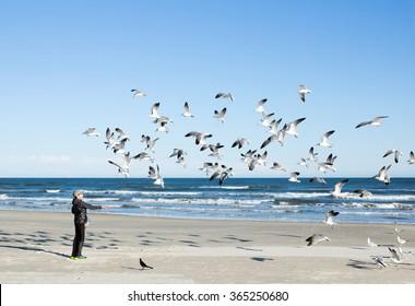 Child feeding seagulls on the sea background. Gulf of Mexico, Texas