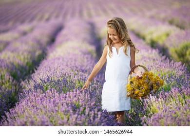 A child in a field with flowers. Teen girl in a lavender field. Happy child in nature.