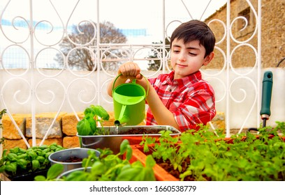 child gardening by watering aromatic plants such as basil and parsley