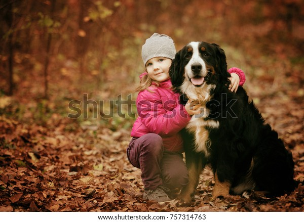 Child Gently Embraces Bernese Mountain Dog Royalty Free