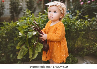 Child girl with beets freshly picked from garden healthy food organic vegetables home grown harvest agriculture concept