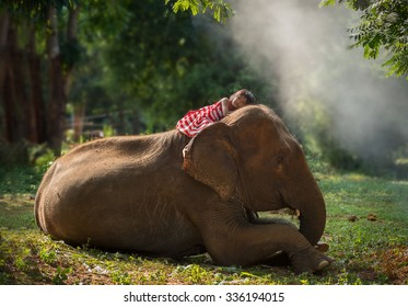 Child girl lying on a large elephant with love touch,