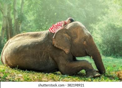Child girl sleeping on baby elephant