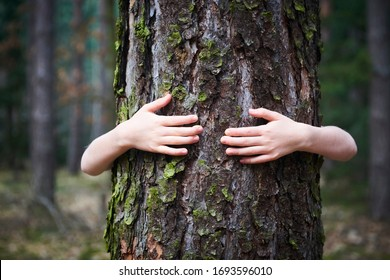 Child girl stand behind and give hug to tree in forest