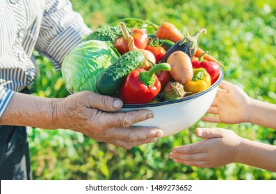 Child and grandmother in the garden with vegetables in their hands. Selective focus. nature.