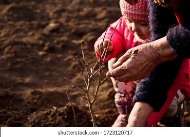 A child with a grandmother plant a tree. An old grandmother with a little granddaughter care for a young seedling. Planting trees. Do not chop the tree. Do not bark trees. Protect the environment.