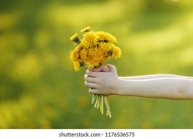 Child hand with bouquet of yellow dandelions. Healthy, medical concept.