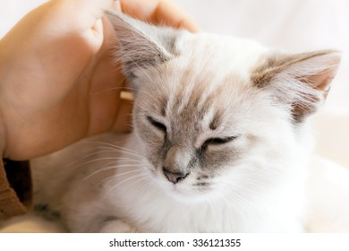 A child hand is caressing the head of a kitten. Taking care and tenderness concept.