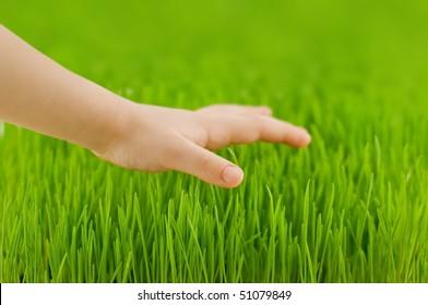 child hand and green grass closeup