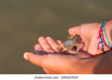 Child hand holding a small crab. On the child wrist are some colourful bracelets.