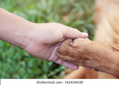child hand and paw holding together, human and animal friendship, animal rights, helping animals concept