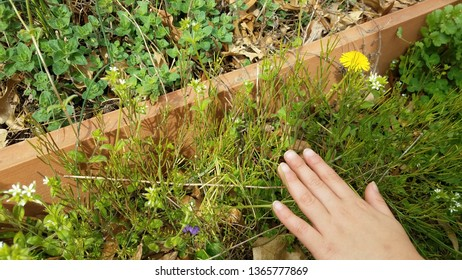 child hand touching green weeds and plants near garden