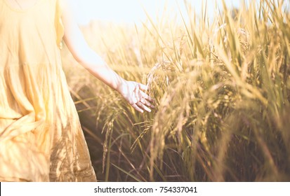 Child hand touching young rice with tenderness in the paddy field in vintage color tone