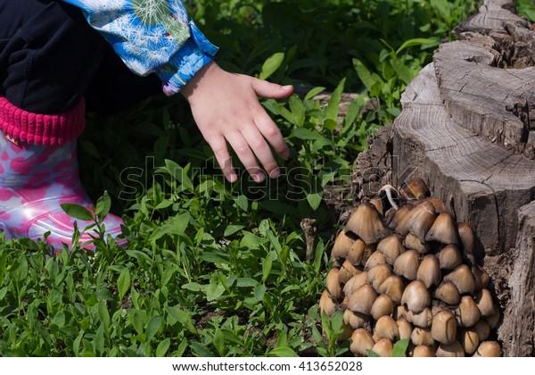 Child Hand Wants To Thwart Poisonous Mushroom