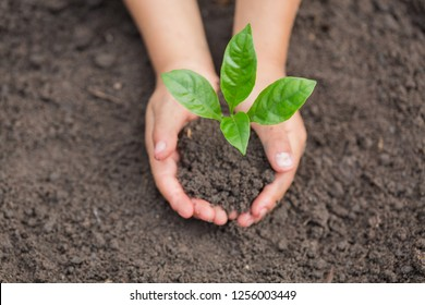 Child hands holding and caring a young green plant, Seedlings are growing from abundant soil, planting tree, reduce global warming,  growing a tree, love nature, World Environment Day