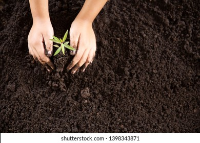 Child hands holding and caring a young green plant, Seedlings are growing from abundant soil, planting trees, reduce global warming, growing a tree, love nature, World Environment Day