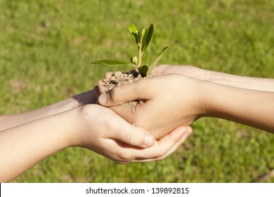 child hands holding sapling in hands