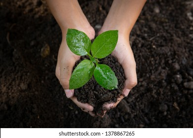 Child hands holding soil and young plant, close up.world environment day.Earth day concept - Shutterstock ID 1378867265