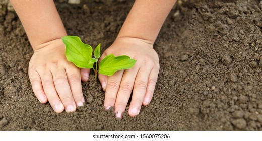 Child hands planting tree plant nature life ecology concept garden banner copyspace copy space gardening