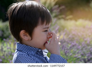 Child having allergy,itchy eyes,and sneezing while playing around in lavender field,Kid boy scratching nose,Children has reflection or hay fever from flower pollen,Allergies and asthma issues in kids