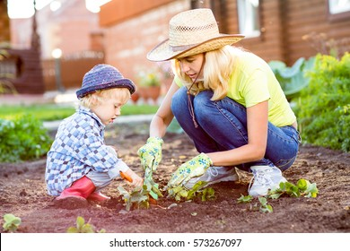 Child and his mother planting strawberry seedling into fertile soil outside in garden