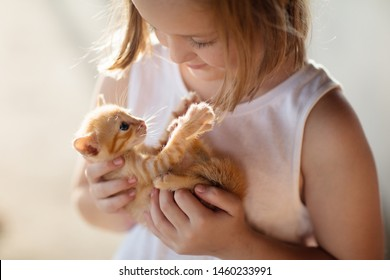 Child holding baby cat. Kids and pets. Little girl hugging cute little kitten in summer garden. Domestic animal in family with kids. Children with home pet animals.