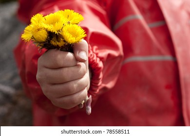 Child holding a bouquet of the first spring flowers