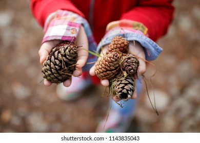 Child holding a bunch of fresh pine cones outdoors