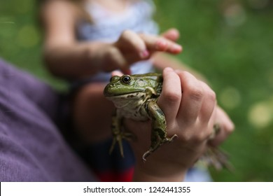 child holding frog in hands, the girl studies and examines the animal. Research interest and natural childhood.