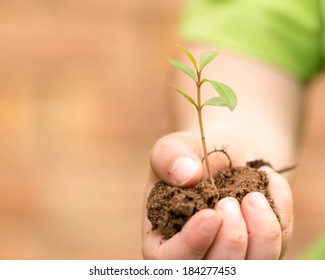 Child holding green plant