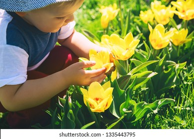 Child holding in his hands and smelling yellow tulips flowers. Little boy playing outdoors in spring park. Tulip field in Arboretum, Slovenia