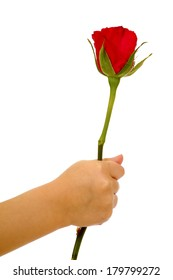 Child holding rose flower in hand on isolated white background