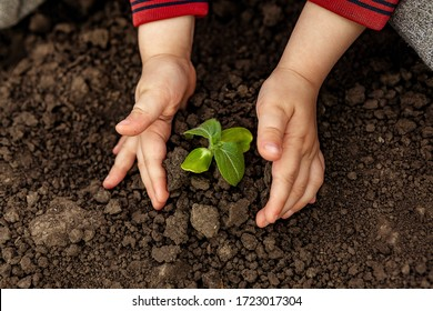 A child is holding a small tree. Concept of world environment day. Two hands hold a light green tree. A child plants a plant