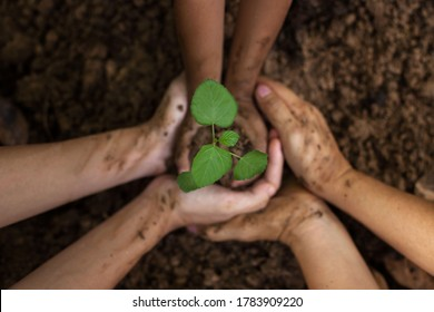 A child is holding a small tree. The hands of Diverse People Planting Tree Together. Soil Planting and Seeding concept.