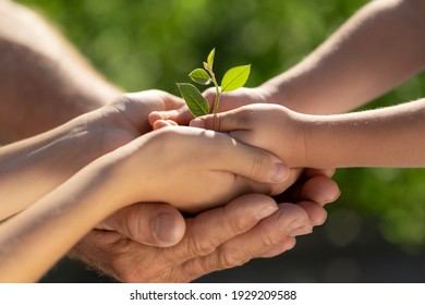 Niño sosteniendo en manos una planta verde joven. Concepto de vacaciones de primavera del día de la Tierra.