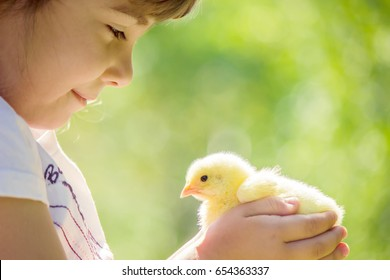 The child holds a chicken in his hands. The girl and the bird. Selective focus.