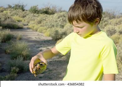 The child holds  Three-toed box turtle (Terrapene carolina triunguis)  in hands