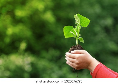 A child holds a young plant in hands against the background of spring green color. The concept of ecology, nature, care