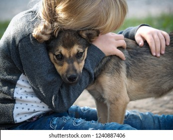 The child hugs the dog. The child and puppy, friendship with your pet, understanding
