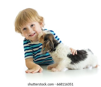 Child little boy plays with his puppy dog, isolated on white background