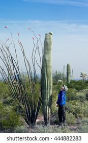 The child looks at the huge cactus - Carnegie giant (Carnegiea gigantea).  Organ Pipe Cactus National Monument, Arizona, US