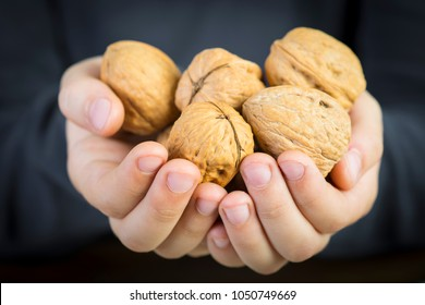 Child offering a lot of walnuts with his hands