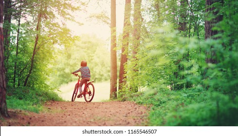 child on a bicycle in the forest in early morning. Boy cycling outdoors in helmet