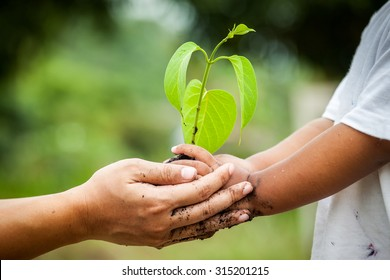 Child with parents hand holding young tree in soil together for prepare plant on ground,save world concept